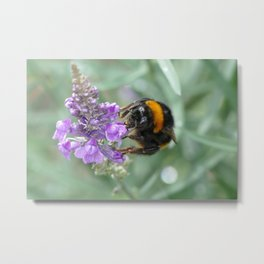 Hello Flower! Metal Print