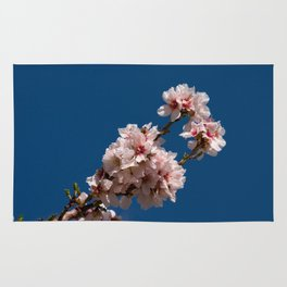 Spring Cherry Tree Blossoms - I Rug
