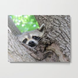 Curiousity From A Tree Metal Print