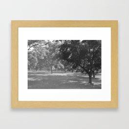 Pecan Orchard Framed Art Print