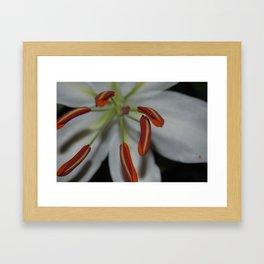 Lillies Framed Art Print