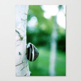 Snail on Silver Birch Canvas Print