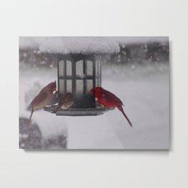 Bird Feeder Metal Print