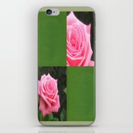 Pink Roses in Anzures 4 Blank Q5F0 iPhone Skin
