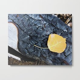 After the Fire Aspen Leaves Grand Canyon North Rim Metal Print