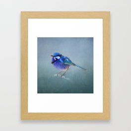 Blue Fairy Wren Framed Art Print