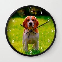 beagle puppy on guard Wall Clock