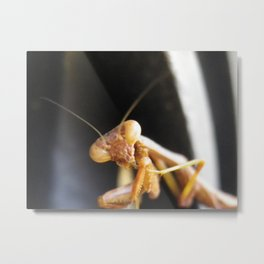 praying mantis licking toes Metal Print