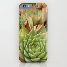 Hens and Chicks Plant Slim Case iPhone 6s