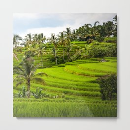 Rice terrace terraces Metal Print