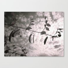 Pods Canvas Print