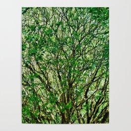 Muir Woods Study 23 Poster