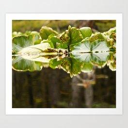 Lily Pad Photography Print Art Print