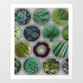 Green Garden Windows 2 Art Print