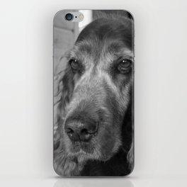 Sad Dog iPhone Skin