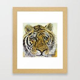 Green Eyed Tiger Animal Art Framed Art Print