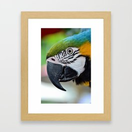 Take My Picture Please Framed Art Print