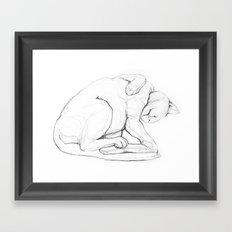 Cat II   /  Chat II   /  Gato II Framed Art Print