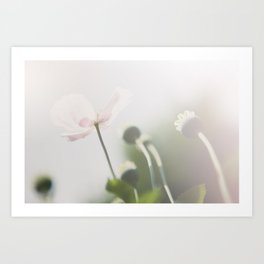 pastel pink poppy in an english country garden photograph Art Print