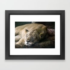 Cat nap II Framed Art Print