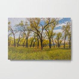 Cottonwoods, Theodore Roosevelt NP, ND 3 Metal Print