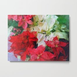 Mixed color Poinsettias 1 Sketchy Metal Print