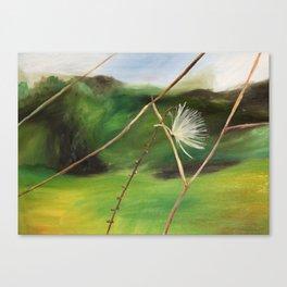 Milkweed Puff Canvas Print