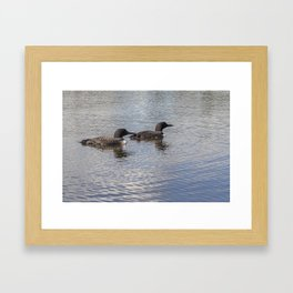 Loon Family Close Up Framed Art Print