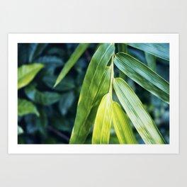 Bamboo Leaf Zen Poster Art Print