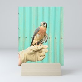American Kestrel Falcon Bird Wildlife Northwest Mini Art Print