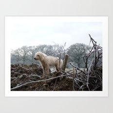 Wilderness Dog Art Print