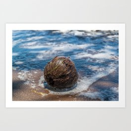 Coconut in Sea-foam III Art Print