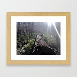 walk in the woods Framed Art Print