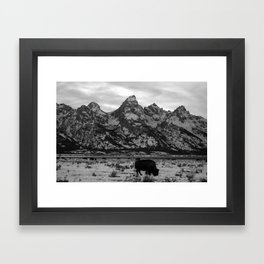 Bison and the Tetons Framed Art Print