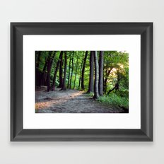 Forest Sunset Framed Art Print