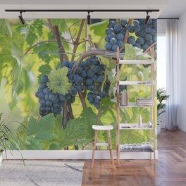 black grape grows on vineyard Wall Mural
