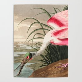 Tropical Exotic Fantasy Bird Landscape Poster