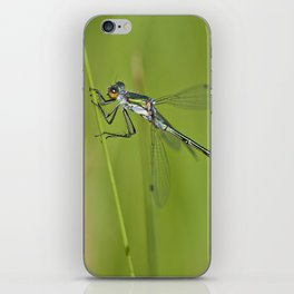 Blue dragonfly iPhone Skin