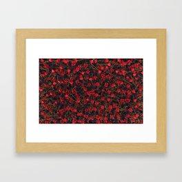 Full of roses Framed Art Print