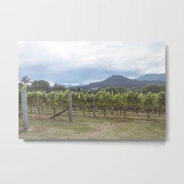 New Zealand Vineyard Metal Print