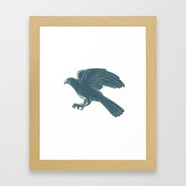 Northern Goshawk Scratchboard Framed Art Print