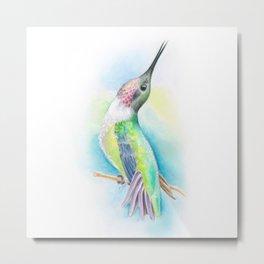 Singing Anna's Hummingbird Watercolor Art Metal Print