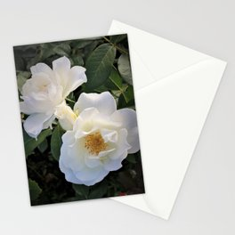 White flower in Butchart's Garden Stationery Cards
