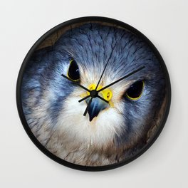 Kestrel in close-up Wall Clock