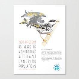 45 Years of Monitoring Landbird Populations - Blackpoll Warbler   Canvas Print