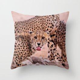 Cheetah Brothers of the Kalahari Throw Pillow