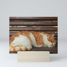 Sleepy Cat Mini Art Print