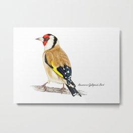 American Goldfinch Bird Metal Print