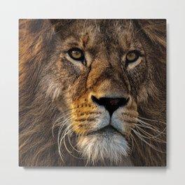 Dark lion's face Metal Print