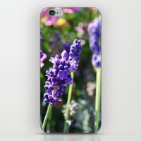 lavender iPhone & iPod Skins featuring Lavender  by JD Photography